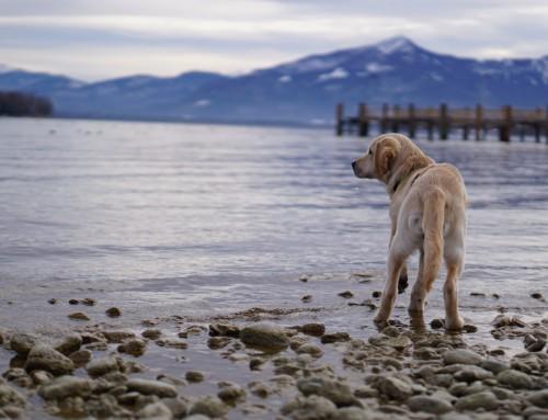 Chiemsee mit Hund