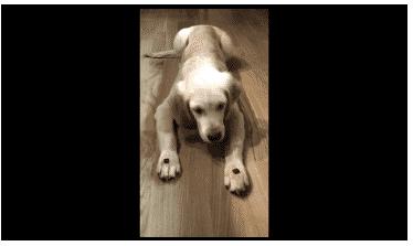 Hundetrick Pfoten Leckerlie