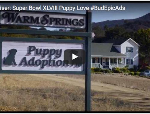 Lustige Hundevideos – Budweiser Commercial