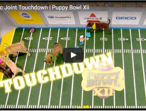 Lustige Hundevideos – Puppy Bowl