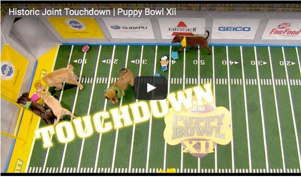 puppybowl video