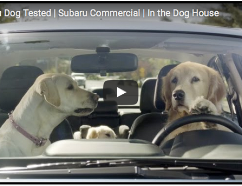 Lustige Hundevideos – Subaru Dog tested