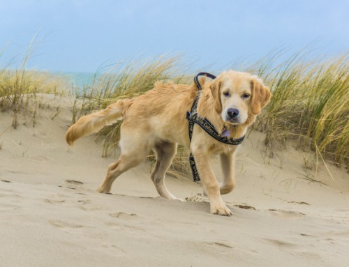 Hundeparadies Holland / Niederlande Urlaub in Renesse