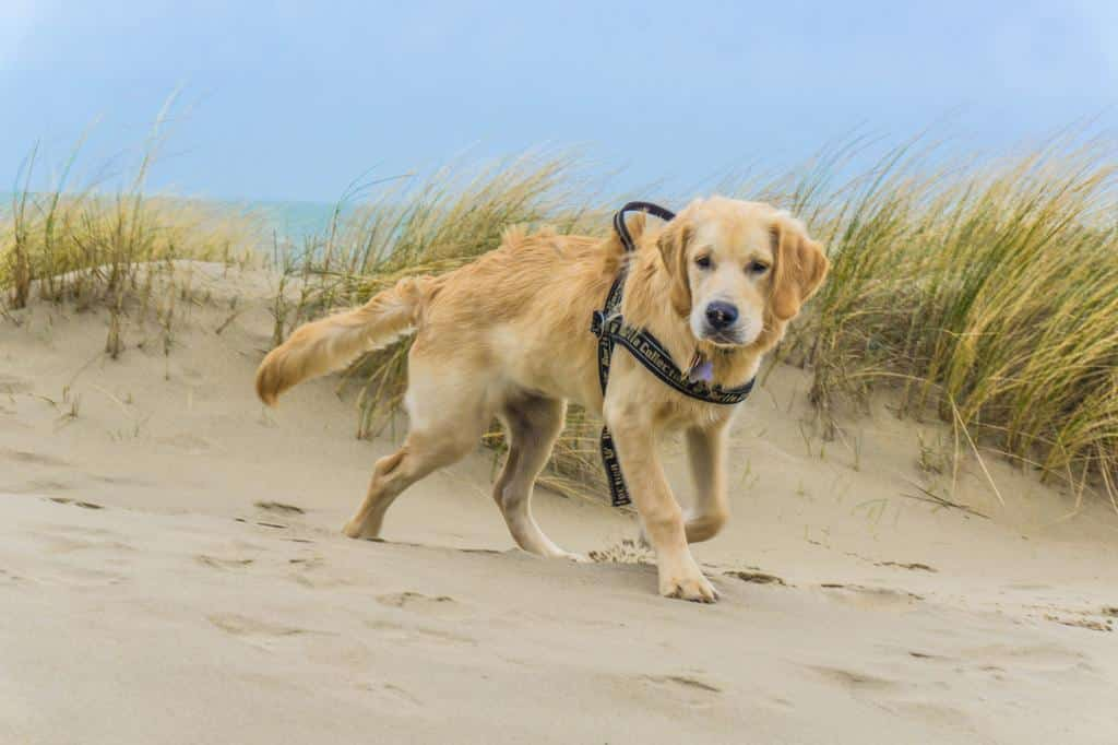 Dünde Hundestrand Holland Renesse