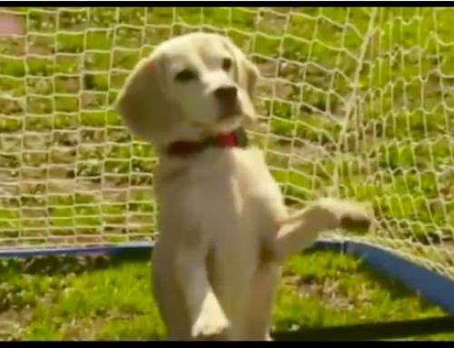 Lustige Hundevideos – der Hundetorwart