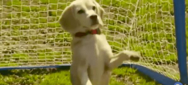 goalkeeper dog torwart hund