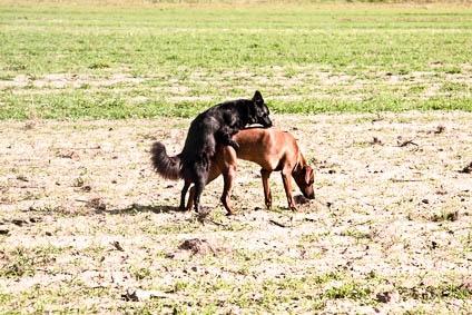 Kastration Hunde